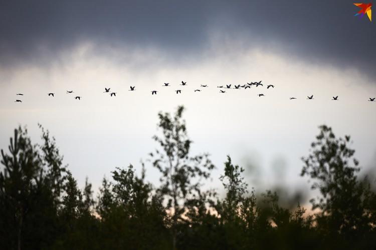 На территории заказника встречается около 98 видов птиц.