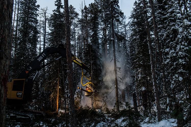 Заготовка леса в Богучанском районе. Зима 2019