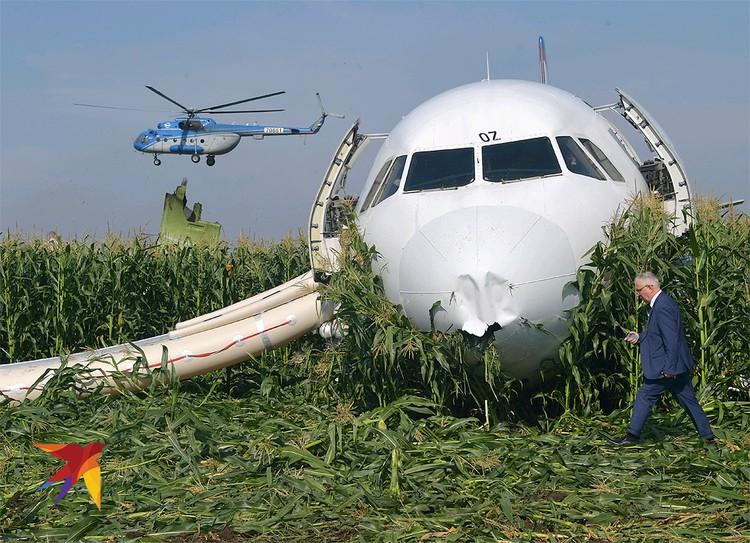 Самолет А321 авиакомпании «Уральские Авиалинии» после аварийной посадки, 15 августа 2019 г.