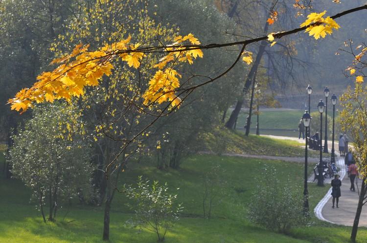 Совсем скоро осень станет золотой.