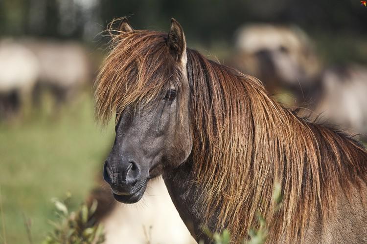 Модная тарпановидная лошадь.