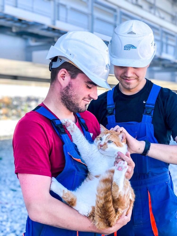 Рыжего кота уважают и любят коллеги-мостостроители. Фото: Кот Моста/VK