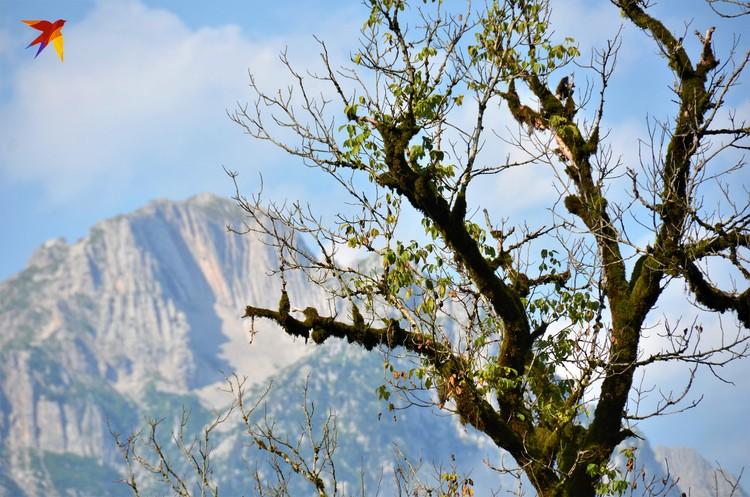 Где-то там в горах живут отшельники