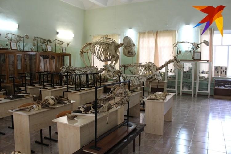 Здесь можно увидеть скелеты лошади, оленя, тигра и даже слона.