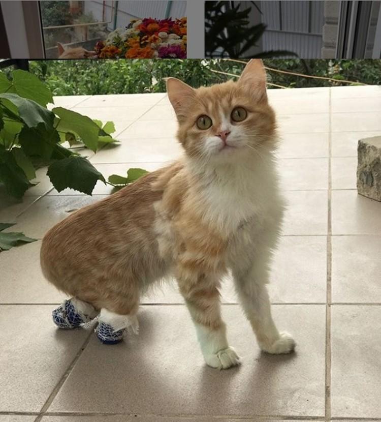 Больше года кошка ходила с повязкой на ножках. Бинты сняли только тогда, когда зажили раны. Фото: instagram.com/zlata_help/