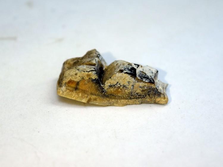 В пещере Сухой было найдено 93 осколка зуба носорога Мерка