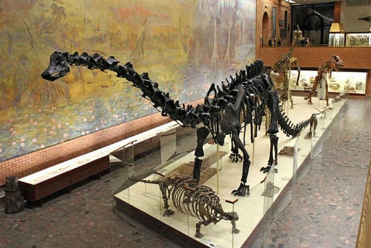 Вероятно, так выглядел тенгризавр – ящер, чьи останки нашли в Бурятии. Фото: Палеонтологический музей им. Ю.А.Орлова.