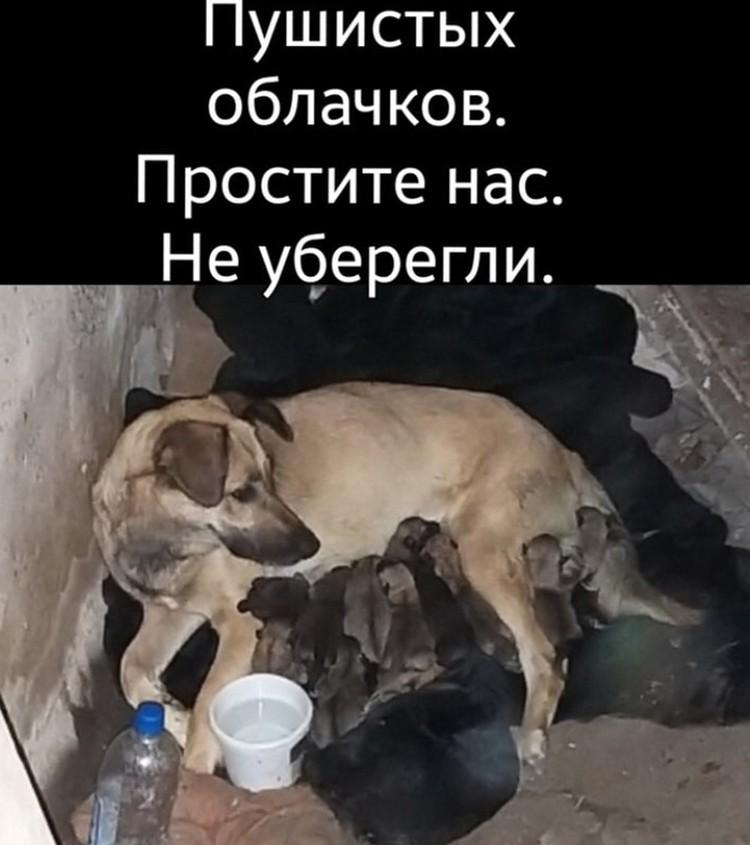 В заброшенной больнице на Строймаше жила собака с двухнедельными щенками.