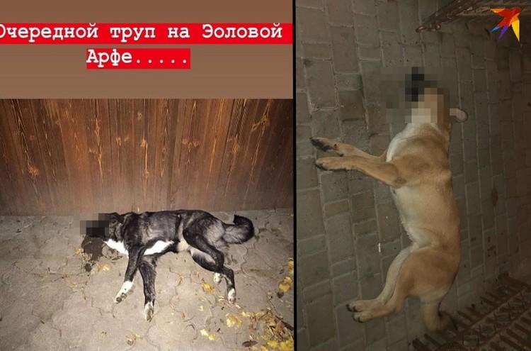 Вот такую картину наблюдают местные в Пятигорске