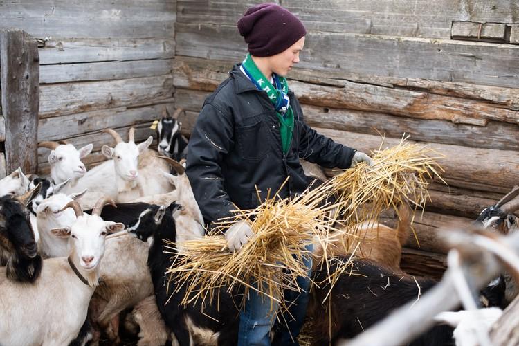 Каждое утро мальчиков начинается с ухода за козами