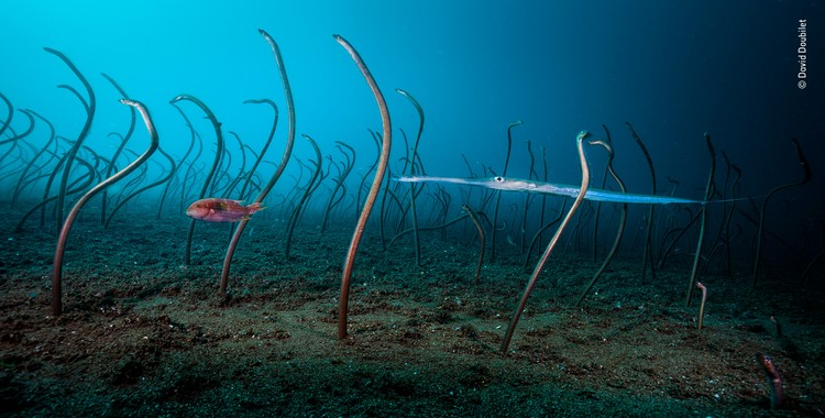 «Сад угрей». Победитель в номинации «Под водой». Автор — Дэвида Дубилета (США)