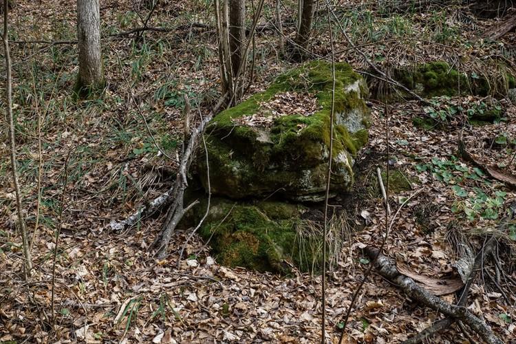 Заросшие мхом валуны, застывшие как изваяния деревья...