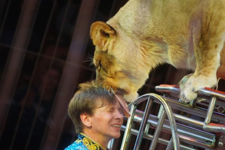 Дрессировщик Виталий Смолянец во время представления «Империя львиц».