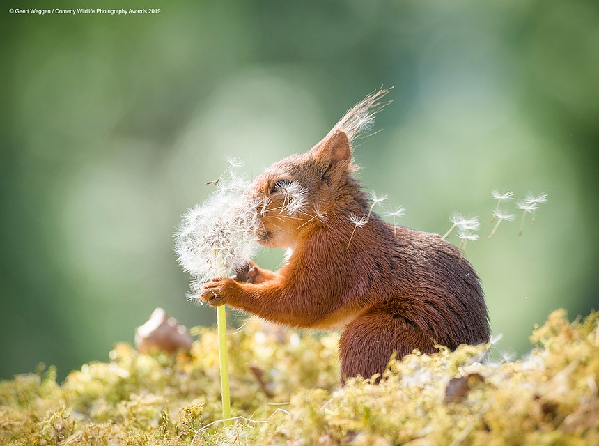 Фото: Geert Weggen/The Comedy Wildlife Photography Awards 2019