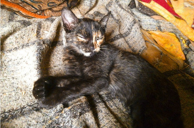 Вот она, героиня, спасшая раненого котенка от смерти. Фото: Елена ВЕТРОВА.