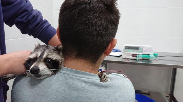 Фото: научный зоопарк «Все как у зверей»
