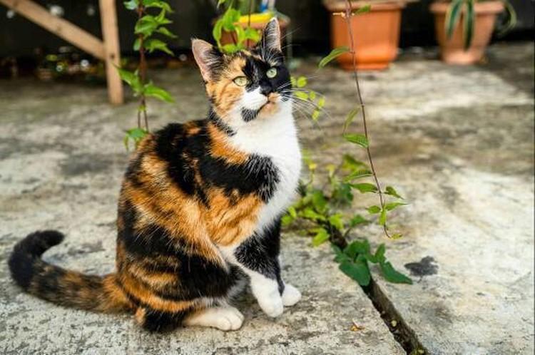 """У Моти вообще непростая судьба. Она пережила отравление и издевательства. Фото: центр помощи бездомным животным """"Мягкие сердца""""."""