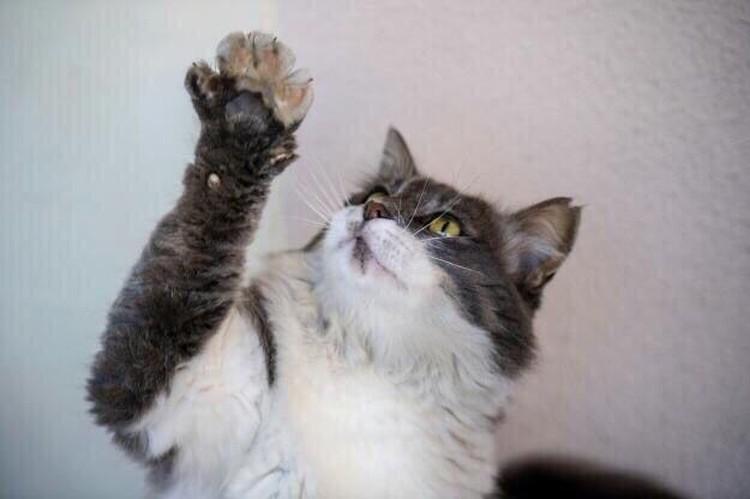 """Серый. Фото: центр помощи бездомным животным """"Мягкие сердца"""""""
