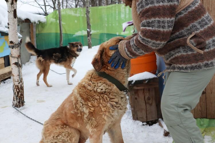 Собак в приюте кормят и выводят на прогулку.
