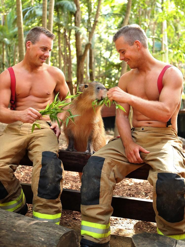 Несколько лет назад красавчики решили начать помогать и приютам для животных Фото: David Rogers (David Rogers)