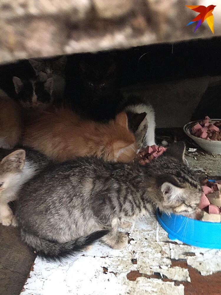 """Волонтеры и две пенсионерки подкармливают малышей. Фото: фонд помощи животным """"Мягкие сердца"""""""