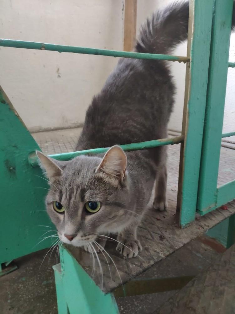 Кошка, которая жила в одной квартире с немыми детьми, теперь гуляет по подъезду. Соседи ее подкармливают.
