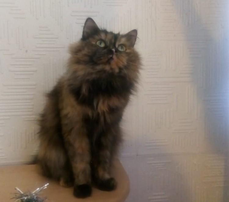 Фото: Счастливый хвост. Помощь кошкам. Пермь