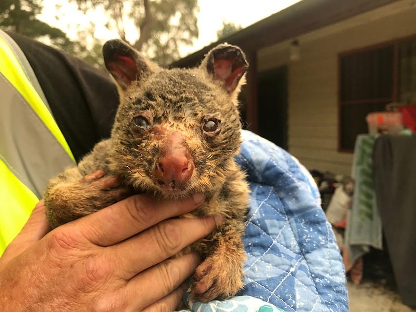 В австралийских лесах гибнут животные. Фото: REUTERS