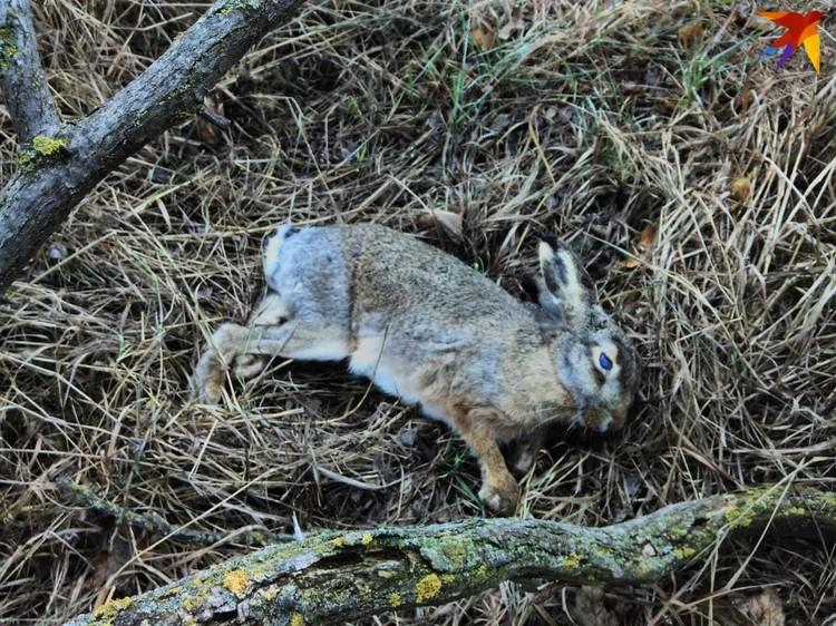Погибли не только птицы, но и зайцы. Фото: Юлия Колесникова.