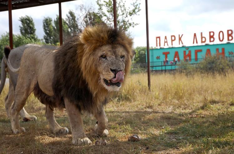 Сафари-парк «Тайган» когда-то был одним из самых успешных инвест-проектов Крыма. Фото: Сергей Мальгавко/ТАСС
