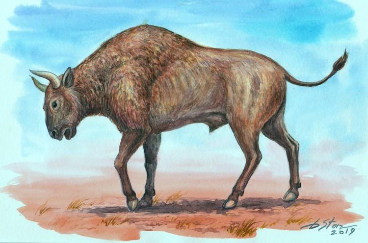 Древний бизон. Фото: Дмитрий Старцев /Пресс-служба КФУ