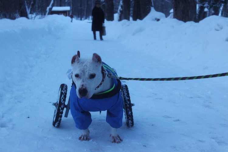 Прохожие удивленно смотрят на собаку в коляске. Иногда подходят к Евгению и просто говорят: «Спасибо!»