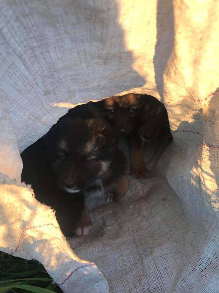 Когда мешки развязали, собаки были на волоске от смерти. Фото: личный архив Яны