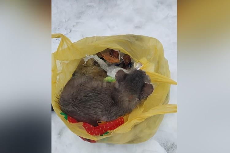 Нижегородка спасла котенка, выкинутого в мороз в мусорный бак