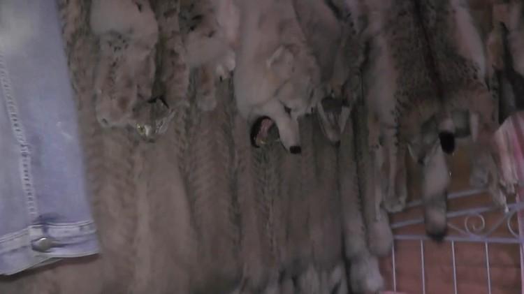 Полицейские нашли шкуры животных Фото: ГУ МВД по СПб и ЛО