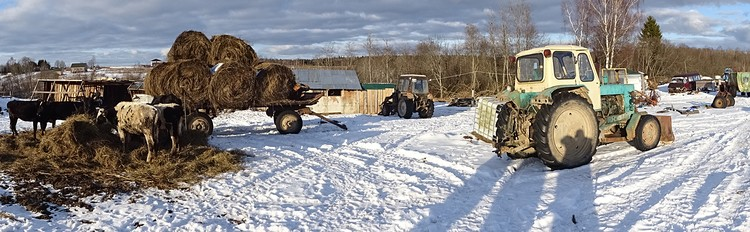 У многих фермерских хозяйств нет денег на дорогостоящее оборудование для нанесения кода, и они могут попросту закрыться, отправив коров на мясокомбинаты.