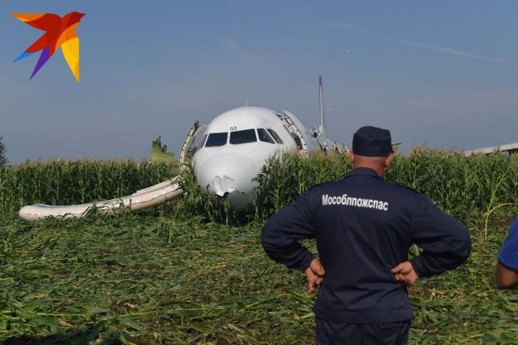 А321 вынужден был совершить экстренную посадку на кукурузном поле в Подмосковье из-за столкновения со стаей птиц.