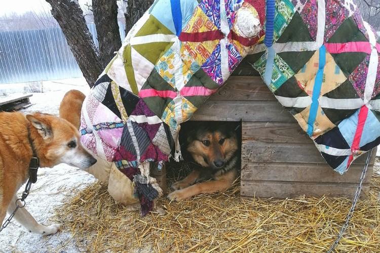 В доме Татьяны Рубцовой уже возникли собачьи семейные пары.