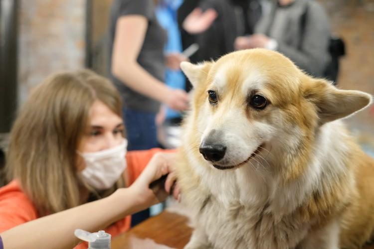 Хотите гарантированно себя обезопасить - начните тщательно мыть собаку после каждой прогулки.