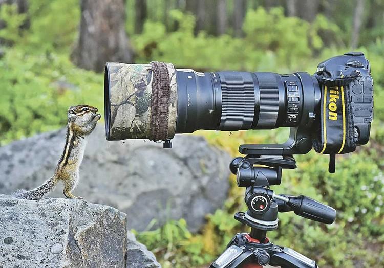 - А отсюда точно вылетит птичка? Фото: Юрий Коковкин.