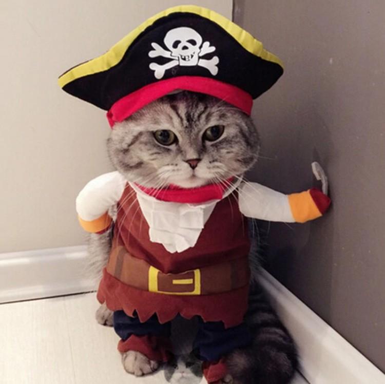 Кот-пират. Фото: aliexpress