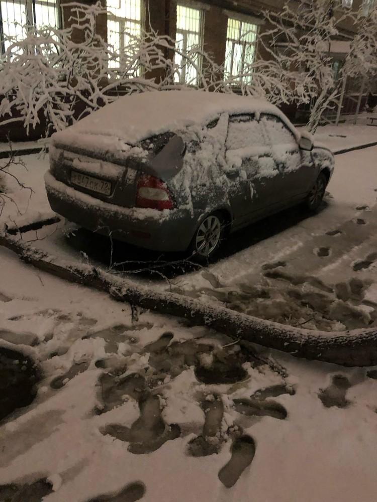Дерево упало в шаге от машины. Фото: Артур Валиев (ЧС Тюмень)