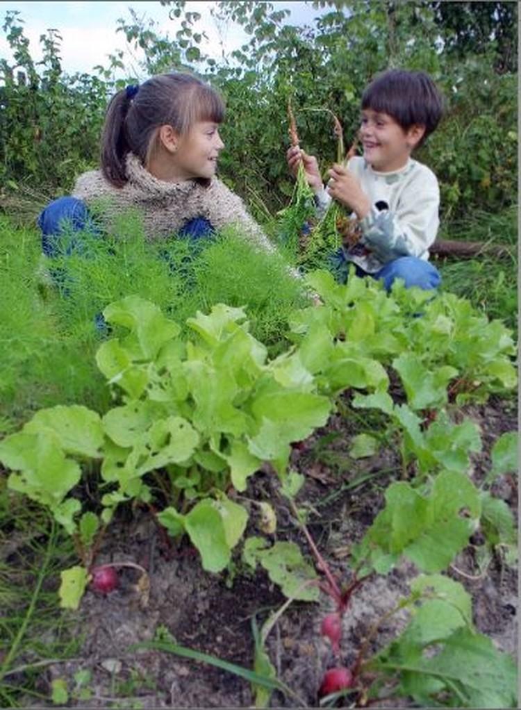 Вырастить урожай можно и на арендованной дачке.