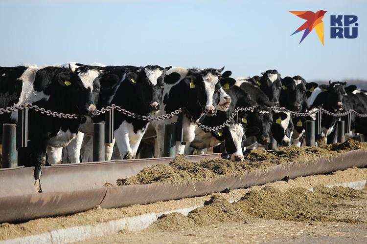 Государство активно помогало формированию крупных агрохолдингов