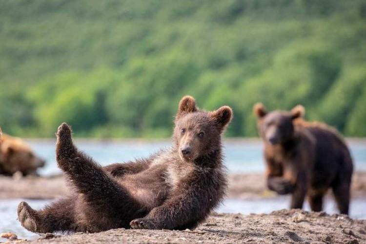 «Утренняя гимнастика». Фото Константина Шатенева («Эти забавные животные»).