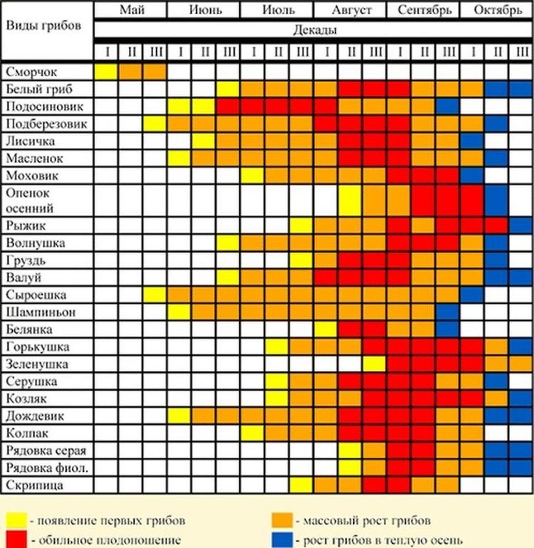 Таблица роста грибов в Новосибирской области. ФОТО: из группы «Грибы и Грибные места НСО» «ВКонтакте»