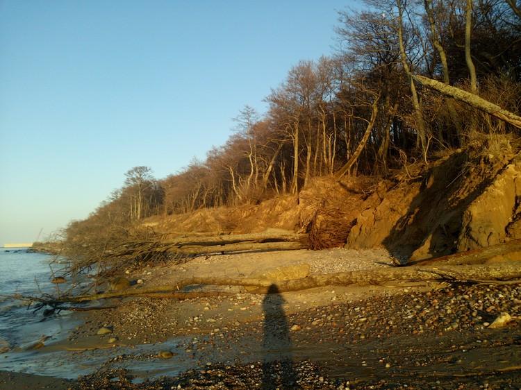 Поваленные деревья возле Пионерского.