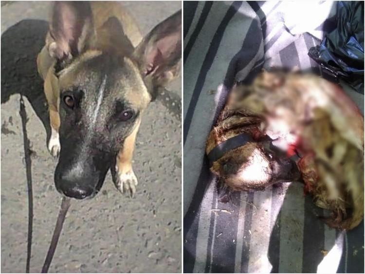 Собаку украли, расчленили и съели, а останки выбросили в лес.