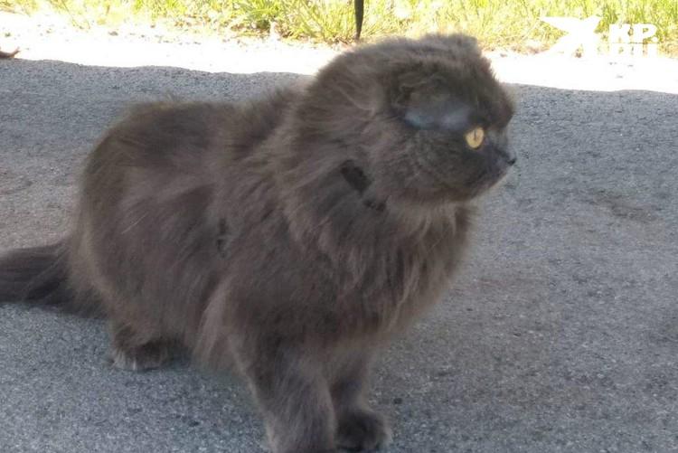 Виктор оставил бы кота себе, но у него аллергия, да и работа водителем к домашним питомцам не располагает
