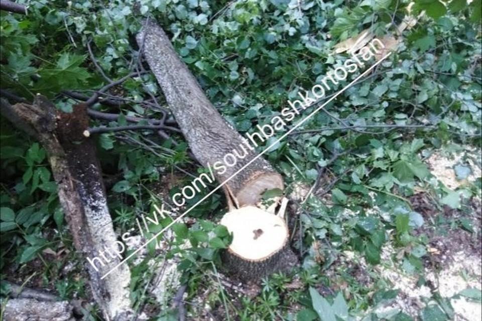 Активисты пока пытаются разобраться – связана ли вырубка леса с деятельносью БСК.
